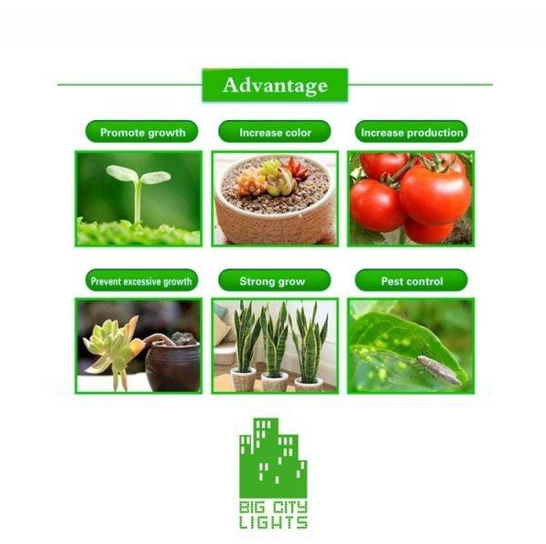 grow light plant greenhouse lighting Canada Toronto plant lite